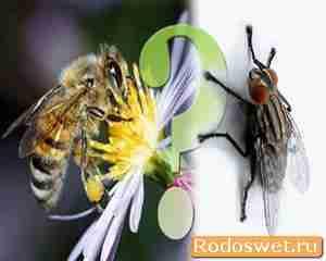 Притча про муху и пчелу