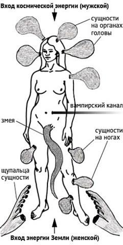 паразитов фото энергетических